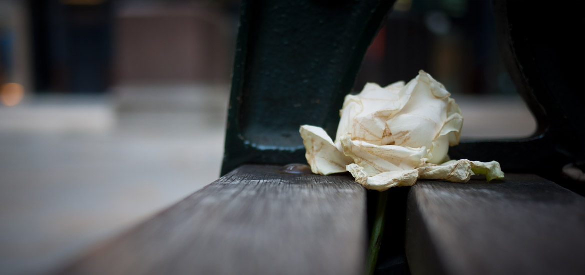 A white rose discarded on a bench